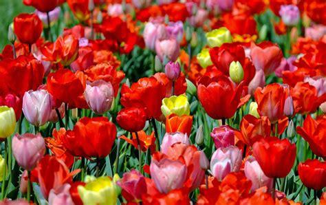 giardini in fiore foto amate i giardini in fiore ecco i pi 249 belli d italia