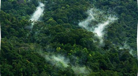 amazon adalah wah gawat ternyata bumi hanya memiliki 2 paru paru ayo