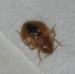 what keeps bed bugs away what you can do to keep bed bugs away