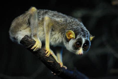 nocturnal animals amazinglanka com