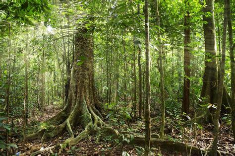 260515 in the forest hangs a abbandono della montagna boom delle foreste in italia