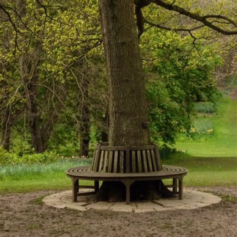 bench around tree bench around a tree trunk garden pinterest
