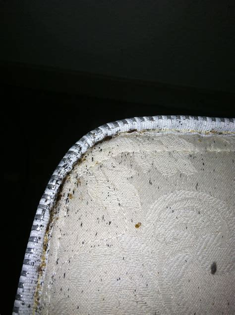 bed bug solution bed bug pictures azex pest solutions bed bug heat and
