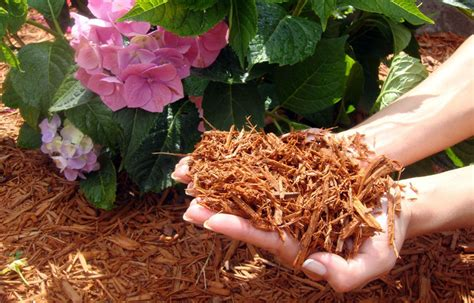 wood mulches to use in the vegetable garden everlast