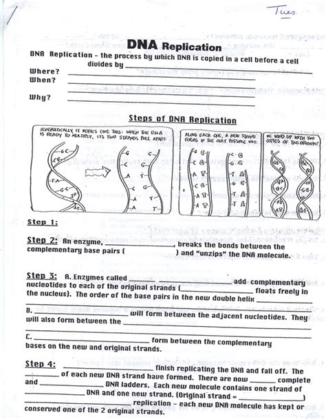 12 2 the structure of dna answers lecture outline student worksheets feap 8 5 melissa