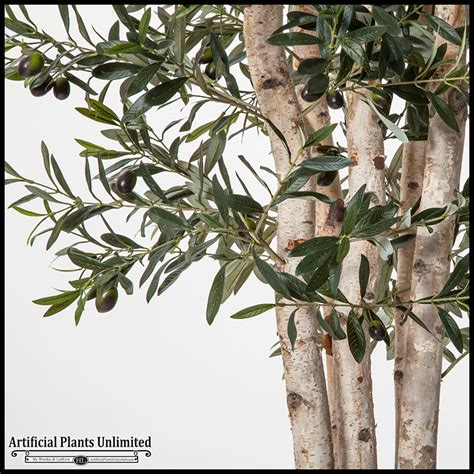 Olive Tree In Planter by 7 Green Olive Tree In Zinc Planter