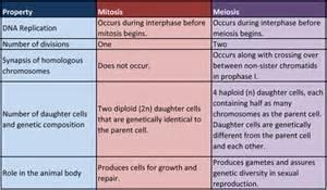 mitosis meiosis worksheet abitlikethis