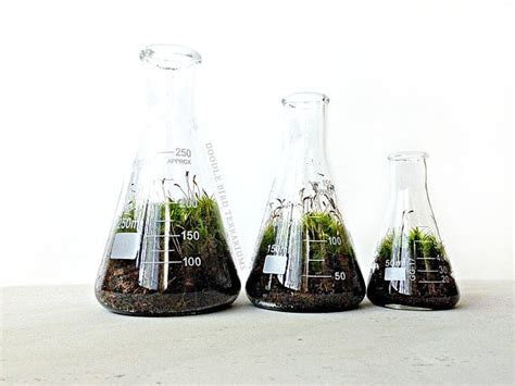 Office Desk Terrarium Terrarium Beakers Office Desk Plants And Planters
