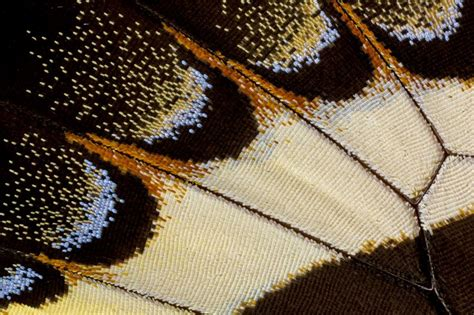 macro pattern photography macro of wing pattern papilio garamas tropical butterfly