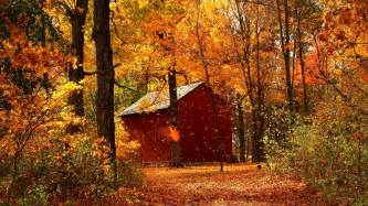 Fall autumn garage wood trees october wallpaper background full