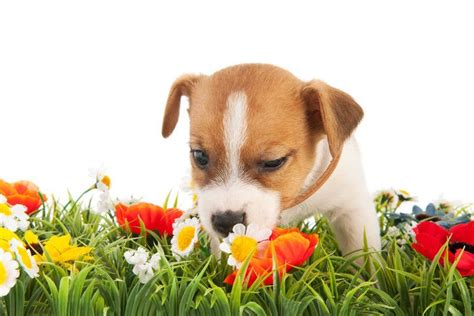 calming essential oils for dogs the top 10 calming essential oils for dogs