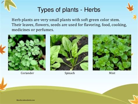 Search In India By Names 11 Best Medicinal Plants Images On Herbs Medicinal Plants And Healing Herbs
