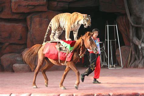 tiger 3 act a thursday forum august 6 2015 catallaxy files