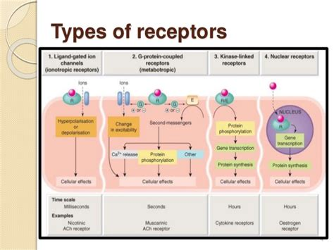 g protein coupled receptor steps g protein coupled receptors