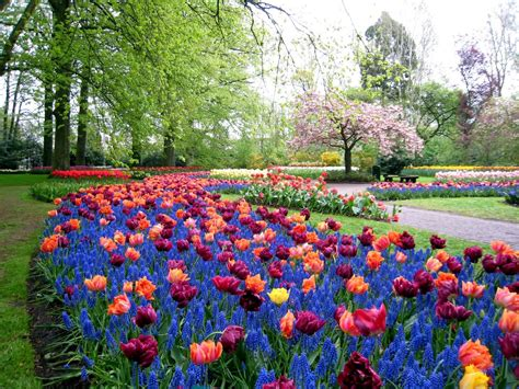 colorful keukenhof gardens world for travel