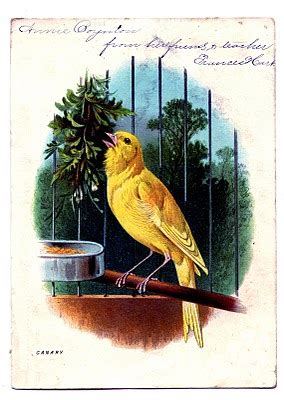 vintage clip art sweet canary  cage  graphics fairy