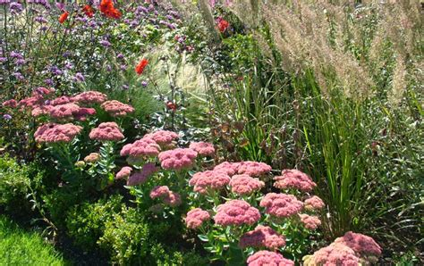 Go wild landscapes natural garden design in oxford and