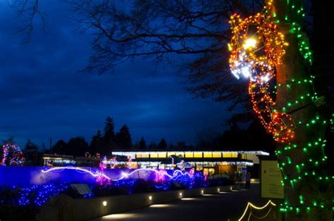 zoo light seattle light up with a trip to the zoo petslady