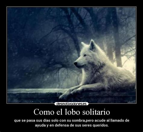 imagenes de lobos tristes el lobo solitario