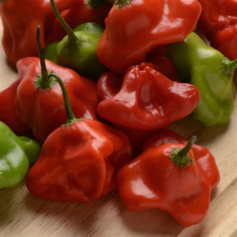 s g vegetables pepper seeds 15 peppers vegetable garden seeds