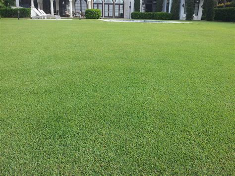 best lawn fertilizer best starter fertilizer 3 top options for the best lawn fertilizer
