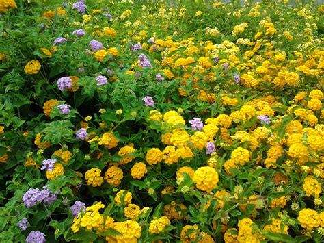 drought tolerant resistant plants or shrubs gardening