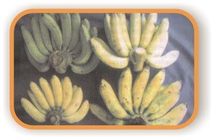 Wajan Dodol cara membuat dodol pisang arif s