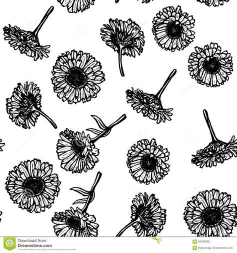 doodle flower vector illustration calendula flowers sketch seamless pattern black stock