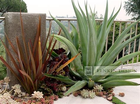 Home Decor Scottsdale Agave And Succulent Garden Modern Landscape Los