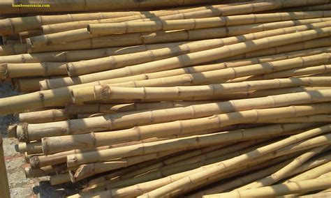 the complete guide to buying the best bamboo sheets of 2018 quality bamboo and asian thatch gt buy bamboo cane poles
