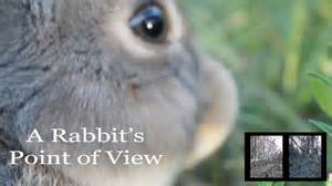 are rabbits blind a rabbit s point of view what rabbits see