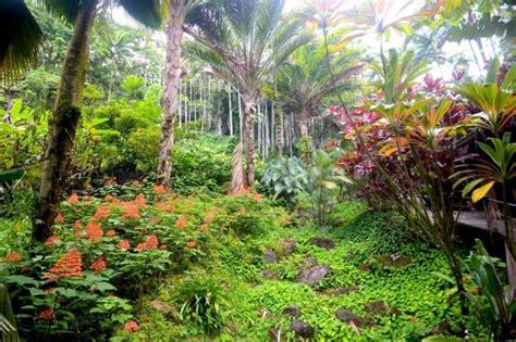 hilo botanical gardens best botanical gardens on the big island hawai i list
