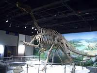 Iguanodon SkeletonJPG  Wikimedia Commons