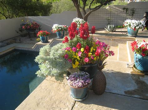 desert container gardening seasonal container garden success coloring with annuals