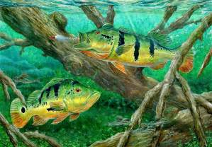Carolina Curtains Catching Peacock Bass Pavon Painting By Terry Fox