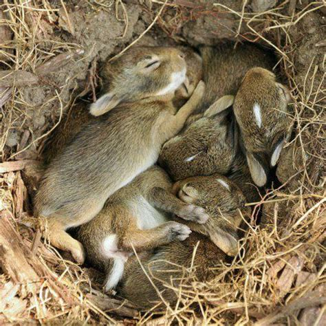 baby bunnies in my backyard goodnight all sweet dreams wee rabbits please share