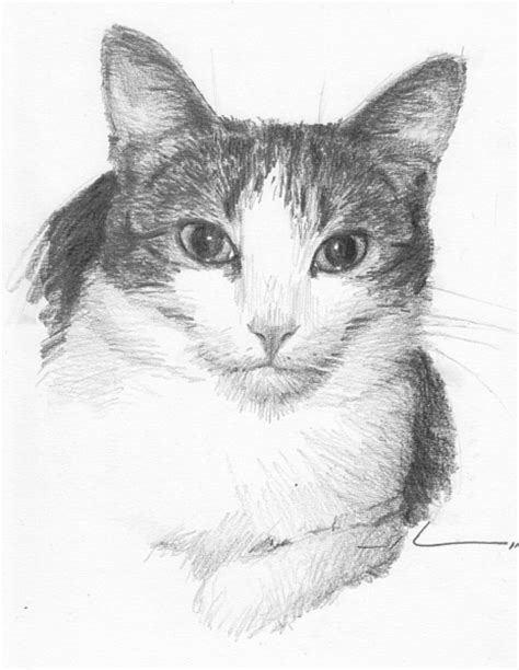 Cat Pencil cat drawing in pencil www pixshark images galleries with a bite
