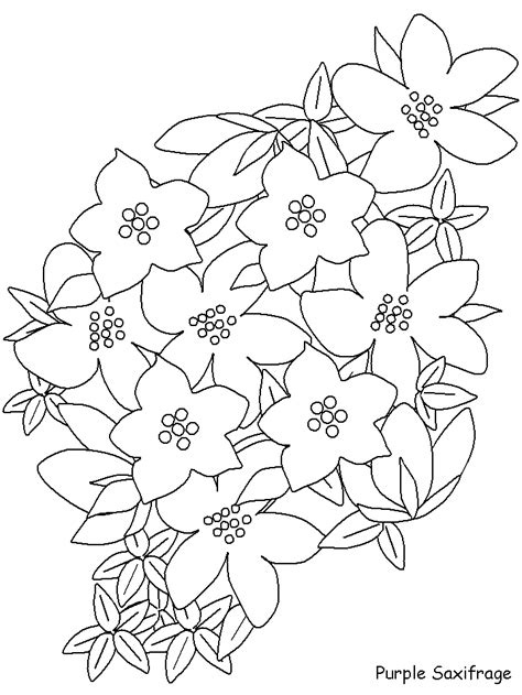 coloring pictures of realistic flowers realistic flower coloring pages coloring home