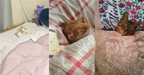 tucked into bed cats cosily tucked into bed is the viral trend we need today