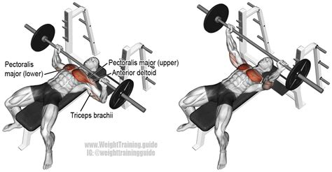 dumbbell bench press muscles worked barbell bench press exercise instructions and video