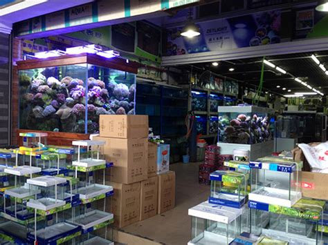 45cm layout aquascape in china also pics of fish