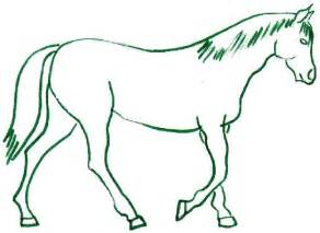 Horse drawing clipart best