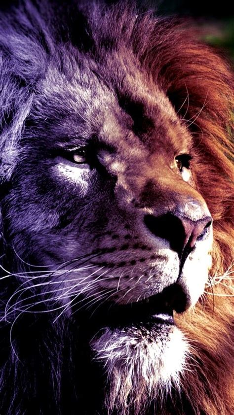 lion tattoo hd photo pin by markus kaletka on cats pinterest leon and lion