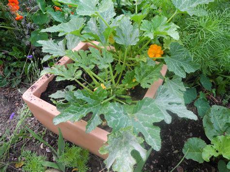 jardiner avec la lune en mars 2016 jardiner avec jean paul