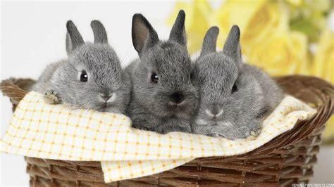grey rabbit wallpaper rabbit wallpapers for desktop wallpaper cave