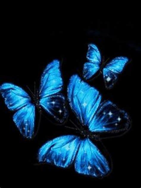 imagenes mariposas turquesas image gallery mariposas azules