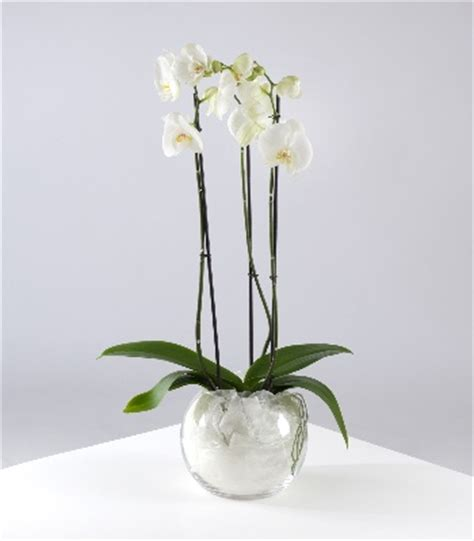 floral design muswell hill orchid planter floral design houseflorist in muswell