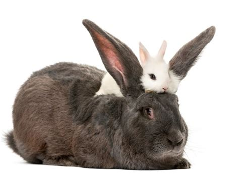 rabbit images what s the difference between a rabbit and a hare
