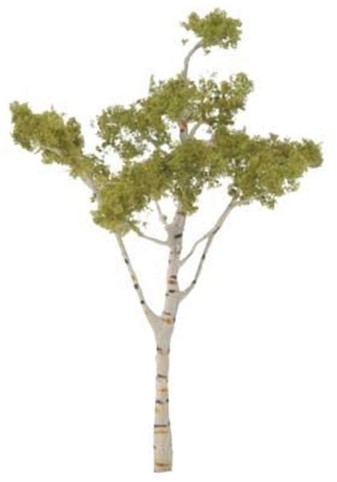 How To Make Model Trees From Paper - ready made premium trees deciduous paper birch 4 1 2