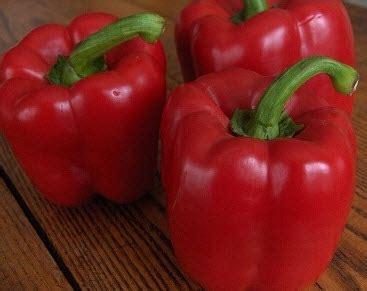 Biji Paprika Merah benih paprika california pepper